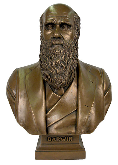 Resin Charles Darwin Bust Bronze Finish